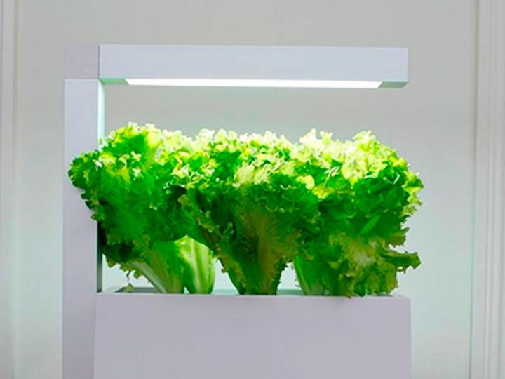 Vasos e sementes Tregren: Design e tecnologia no teu jardim