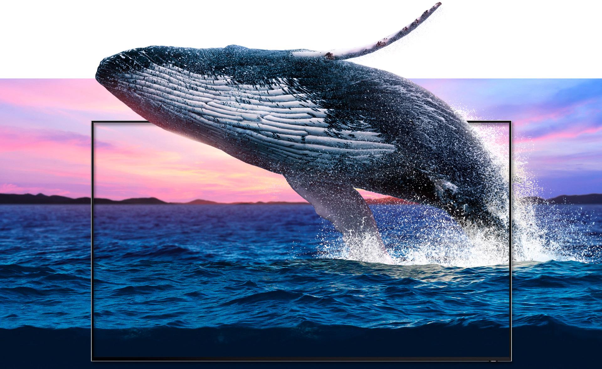 Uma vibrante paisagem marítima justaposta com uma moldura da nova QLED TV instalada no meio da imagem, através da qual uma baleia aparece do oceano. As ondas e a baleia são ilustrados com uma qualidade de detalhes que as tornam extremamente realistas.